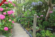 The Hydrangea lined steps lead you up to the secluded garden of the Garden Suite.